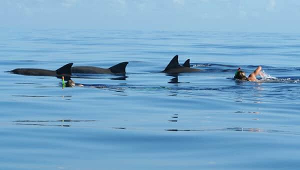 Nado con delfines salvajes
