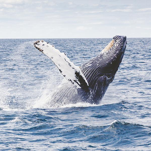 Sea Safari – Whale Watching